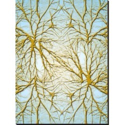 Stretched Canvas Print: Wonderful Dream's Neurons Medical Cell System,