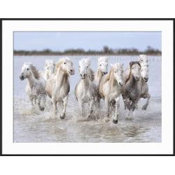 Framed Art: Carmassi's Running Wild Horses, 29x37in.