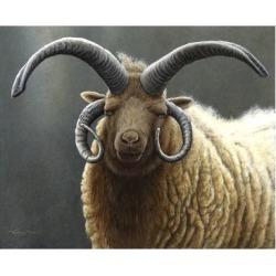 Giclee Painting: Paul's Loaghtan Ram, 24x18in.
