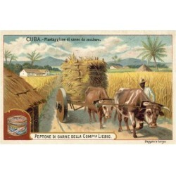 Giclee Painting: Sugar Cane Plantation, Cuba, 24x16in.