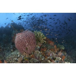 Poster: Stocktrek Images' Bright Sponges, Soft Corals and Crinoids in