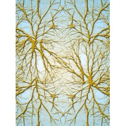 Giclee Painting: Wonderful Dream's Neurons Medical Cell System, 24x18i
