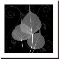 Stretched Canvas Print: Koetsier's Bo Tree Leaf Xray, 24x24in.