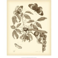 Giclee Painting: Merian's Art Print: Nature Study in Sepia Wall Art by