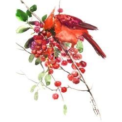 Art Print: Nersisyan's Cardinal And Berries, 16x12in.