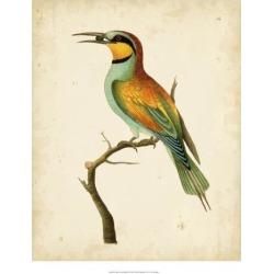 Giclee Painting: Nodder's Art Print: Nodder Tropical Bird Art Print by