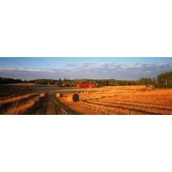 Poster: Hay Bales in a Field, Flen, Sodermanland County, Sweden, 42x14