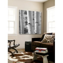 Loft Art: Cotter's Birches in Grey I, 72x72in. found on Bargain Bro Philippines from Allposters.com for $614.95