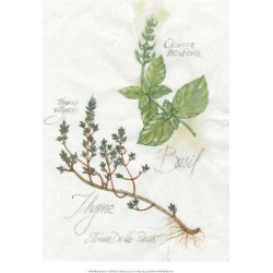 Giclee Painting: Della-piana's Basil & Thyme, 18x14in. found on Bargain Bro from Allposters.com for USD $13.67