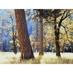 Poster: Frank's California, Sierra Nevada, Yosemite National Park, Tre