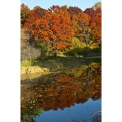 Poster: Friel's USA, Minnesota, Sunfish Lake, Fall Color Reflected in