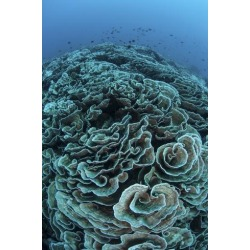 Poster: Stocktrek Images' Corals are Beginning to Bleach on a Reef in