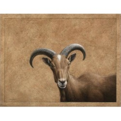 Giclee Painting: Johnson's Barbary Ram, 24x18in.