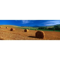 Poster: Poster: Hay Bales in a Field, Val D'Orcia Poster, 42x14in.
