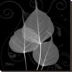 Stretched Canvas Print: Koetsier's Bo Tree Leaf Xray, 20x20in.