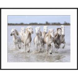 Framed Art: Carmassi's Running Wild Horses, 23x29in.