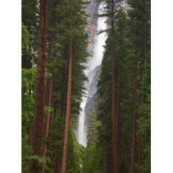 Poster: Wild's Upper and Lower Yosemite Falls. Yosemite National Park,