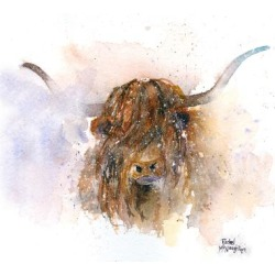 Art Print: A.V. Art's Highland Cow, 24x24in.