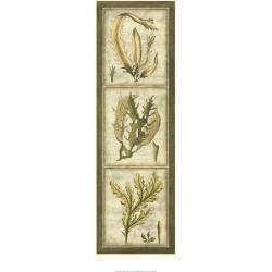 Giclee Painting: Slocum's Art Print: Exotic Seaweed Panel Art Print by