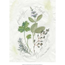 Giclee Painting: Della-piana's Parsley & Sage, 18x14in. found on Bargain Bro from Allposters.com for USD $13.67