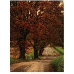 Giclee Painting: Head's Dirt Road, 26x20in.