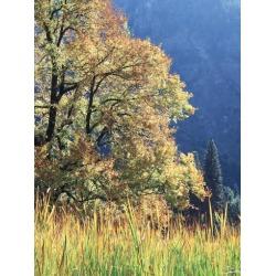Poster: Frank's California, Sierra Nevada, Yosemite National Park, Cat