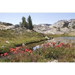 Poster: Whitfield's Usa, California, Yosemite National Park, General V