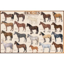 Poster: Horses, 24x36in.