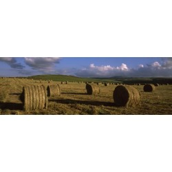 Poster: Poster: Hay Bales in a Field, Underberg Poster, 42x14in.