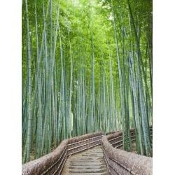 Poster: Vidler's Japan, Kyoto, Arashiyama, Adashino Nembutsu-ji Temple