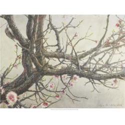 Art Print: Vest's Apricot Creeper, 19x25in.