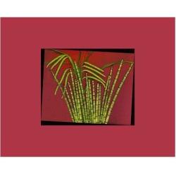 Art Print: Hot pink tropical Grass, 9x12in.