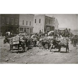 Art Print: Loaded Mining Pack Mules ca. 1880s Hauling Mining Supplies In An Early Town: 24x16in