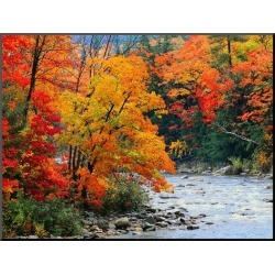 Mounted Print: Stream in Autumn Woods: 24x32in