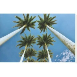 Stretched Canvas Print: Looking Up by Dennis Frates: 12x18in found on Bargain Bro India from Art.com for $65.00