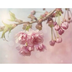 Art Print: Pink Cherry Blossom Tree by egal: 24x18in