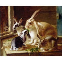 Giclee Print: Long-Eared Rabbits in a Cage, Watched by a Cat by Horatio Henry Couldery: 24x18in