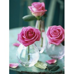 Photographic Print: Three Pink Roses in Vases on a Garden Table by Michael Paul: 24x18in
