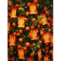 Photographic Print: Tangerine Good Luck Symbols, Chinese New Year Decoration, Macao, China, Asia: 24x18in