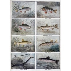 Giclee Print: Freshwater Fish, 1897 by F Meaulle: 24x18in found on Bargain Bro India from Art.com for $25.00
