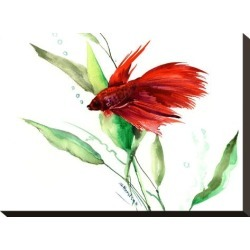 Stretched Canvas Print: Betta by Suren Nersisyan: 12x16in found on Bargain Bro from Art.com for USD $57.00