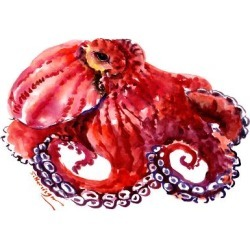 Stretched Canvas Print: Red Octopus Cherry Color 2 by Suren Nersisyan: 18x24in found on Bargain Bro from Art.com for USD $83.60