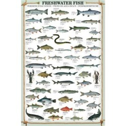 Art Print: Freshwater Fish: 40x30in found on Bargain Bro India from Art.com for $37.00