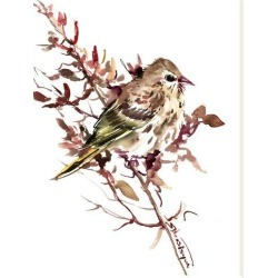 Stretched Canvas Print: Pine Siskin by Suren Nersisyan: 40x30in found on Bargain Bro India from Art.com for $140.00