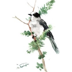 Art Print: Gray Jay by Suren Nersisyan: 16x12in found on Bargain Bro from Art.com for USD $15.20