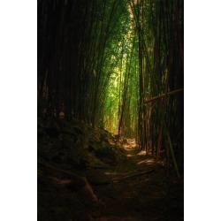 Photographic Print: Bamboo Path Maui Road to Hana Hawaii Tropical Forest by Vincent James: 36x24in found on Bargain Bro India from Art.com for $40.00