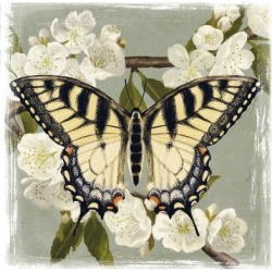 Art Print: Butterfly Branch II by Victoria Borges: 16x16in found on Bargain Bro Philippines from Art.com for $15.00