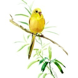 Giclee Print: Budgie Parakeet 3 by Suren Nersisyan: 40x30in found on Bargain Bro Philippines from Art.com for $70.00