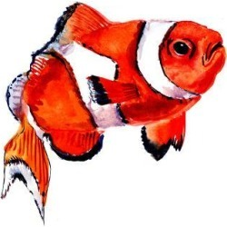 Art Print: Clown Fish by Suren Nersisyan: 16x16in found on Bargain Bro from Art.com for USD $15.20