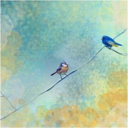 Premium Giclee Print: Two birds by Claire Westwood: 24x32in